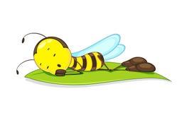 Confused пчела Стоковые Фотографии RF