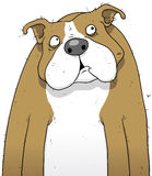 Confused dog cartoon character Stock Photo