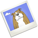 Confused dog polaroid cartoon character. Royalty Free Stock Image