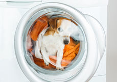 Confused pup spaceman looking through the glass of the washing machine hatch. Laundry and dry cleaning pet service Royalty Free Stock Photography