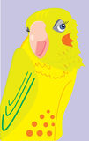 Confused red-faced cockatiel parrot ogle Stock Photography