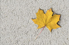 Congé d'automne au sol, fond Photographie stock libre de droits