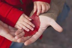 Congé d'automne rouge dans des mains de père et de fille Photos stock
