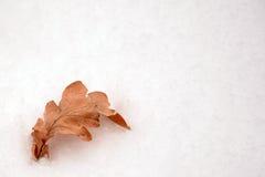 Congé de chêne dans la neige d'isolement photos libres de droits