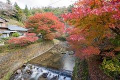 Congé rouge de fond de paysage d'automne dans Obara Nagoya Japon Photos libres de droits