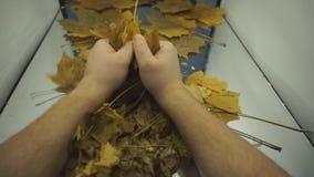 Congé sec de tabac avec les détails évidents fins de structure dans la fin de rotation  Projectile de studio Solonaceae, tabacum  clips vidéos