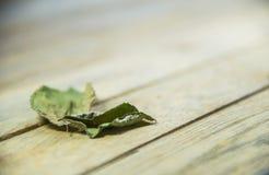 Congé sec sur le plancher en bois photographie stock libre de droits