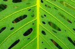 Congé tropical avec des gouttes de pluie Image stock