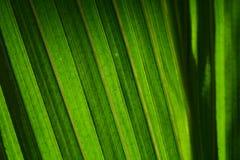 Congé vert Photo stock