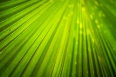 Congé vert sous le soleil Photos stock