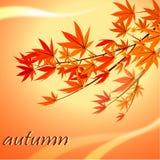 Congé d'automne Photographie stock