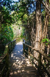 Congaree National Park Royalty Free Stock Photos