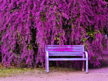 Congea tomentosa Roxb 老椅子和美丽的花园 库存照片