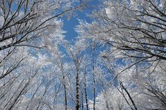 Congelé Image stock