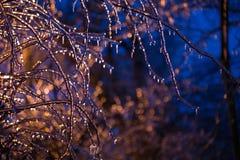 Congelé dans les branches de glace Photos libres de droits
