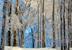 Congelação da manhã do inverno Fotos de Stock Royalty Free