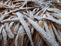 Congelação na planta Imagens de Stock
