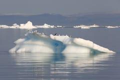Congela e iceberg de regiões polares de terra foto de stock royalty free