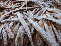 Congelación en la planta Imagenes de archivo