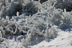 Congelado Fotos de archivo