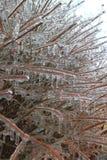 Congelado Fotografia de Stock Royalty Free