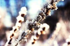 congelado Fotografía de archivo libre de regalías