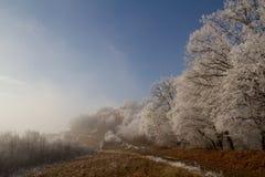 congelado Imagem de Stock