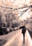 Congelado em ramos do gelo, árvores congeladas no fundo urbano Foto de Stock Royalty Free