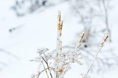 Congelado en hielo en la hierba del invierno Imágenes de archivo libres de regalías