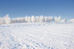 Congelado en la arboleda Fotografía de archivo libre de regalías