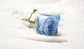 Congelado levantou-se Imagem de Stock Royalty Free
