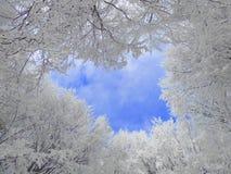 Congelamento degli alberi di inverno Immagini Stock