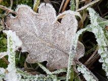 Congelato in Italia Immagini Stock Libere da Diritti