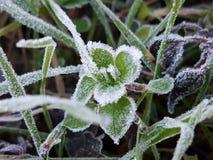 Congelato in Italia Fotografia Stock