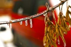 Congelato nei rami di albero del ghiaccio, alberi ghiacciati Immagine Stock Libera da Diritti