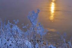 Congelato nel ramo del gelo Immagine Stock Libera da Diritti