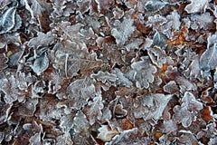 Congelato su terra Immagini Stock