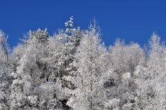Congelato sugli alberi Fotografia Stock