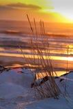 Congelato a tempo Fotografia Stock
