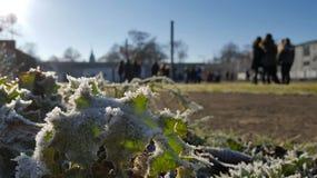 Congele as folhas Fotos de Stock Royalty Free