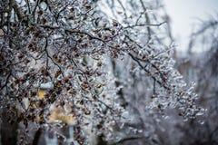 Congele a chuva Fotos de Stock Royalty Free