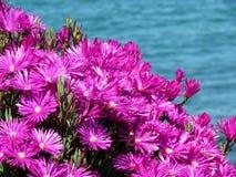 Congele flores Imagens de Stock