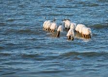 Congele no quebra-mar no mar, as gaivota que estão nos quebra-mares do gelo imagem de stock