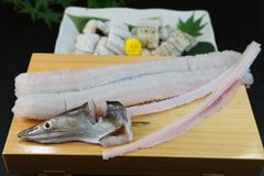 Conger pike is treated as a luxury foodstuff in Japan. This is called yubiki hamo parboiled conger pike or botan hamo peony-shaped conger pike Royalty Free Stock Photography