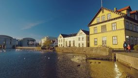 Congestion of wild birds on a city lake in centre of Reykjavik in Iceland and buildings, sunny stock footage