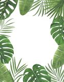 Congratul botânico da decoração do projeto do convite do cartão da decoração das decorações das ilustrações da aquarela dos trópi imagem de stock