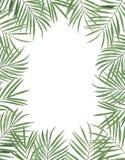 Congratul botânico da decoração do projeto do convite do cartão da decoração das decorações das ilustrações da aquarela dos trópi fotos de stock