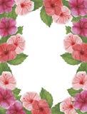 Congratul botânico da decoração do projeto do convite do cartão da decoração das decorações das ilustrações da aquarela do hibisc fotografia de stock