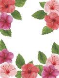Congratul botânico da decoração do projeto do convite do cartão da decoração das decorações das ilustrações da aquarela do hibisc fotos de stock