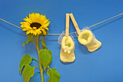 Congratulation. Yellow pair of baby socks hanging on the clothesline. Newborn congratulations concept shot. NOTE: Blue background looks noisy, but it is the Stock Images